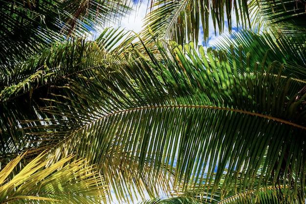 Foglie di palma con sfondo Foto Premium