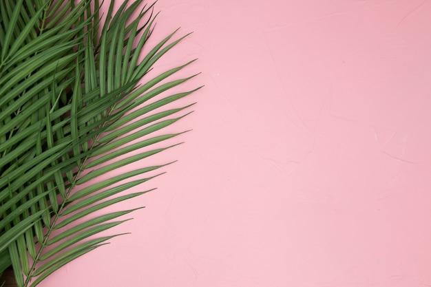 Foglie di palma su sfondo rosa Foto Gratuite