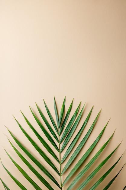 Foglie di palma tropicali sul fondo di colore. concetto di estate. Foto Premium