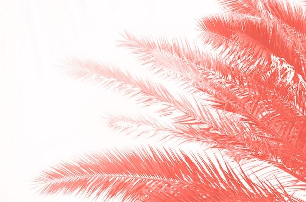 Foglie e rami di palma verdi tropicali su colore di corallo. giornata di sole, concetto estivo. sole sopra le palme. viaggi, vacanze sfondo. Foto Premium