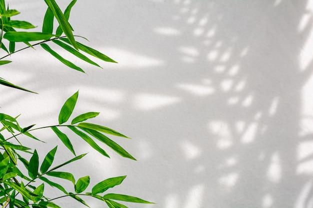 Foglie ed ombra di bambù tropicali sul muro di cemento bianco Foto Premium
