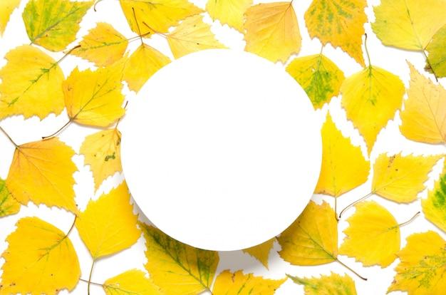Foglie gialle autunnali con un cerchio su carta bianca Foto Premium