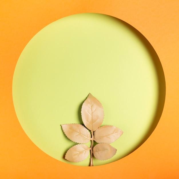 Foglie neutre con cornice arancione Foto Gratuite