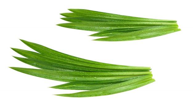 Foglie pandan verdi fresche con le goccioline di acqua isolate Foto Premium