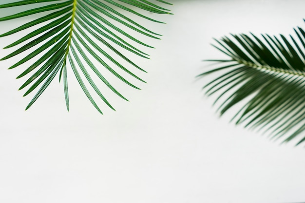Foglie su sfondo bianco. banner estivo Foto Premium