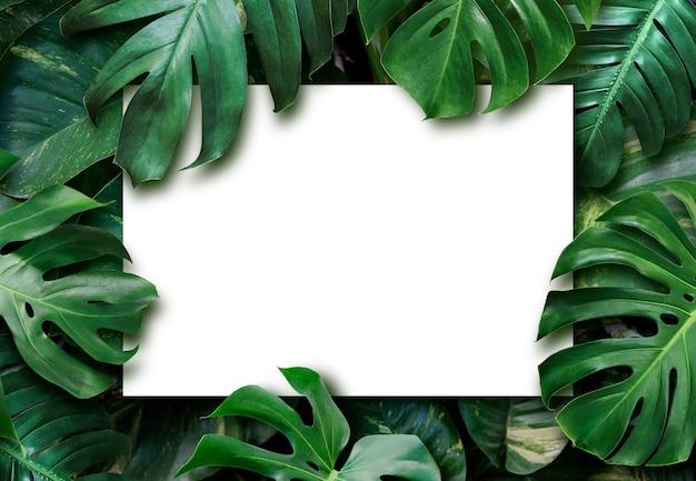 Foglie tropicali e sfondo bianco carta bianca Foto Premium