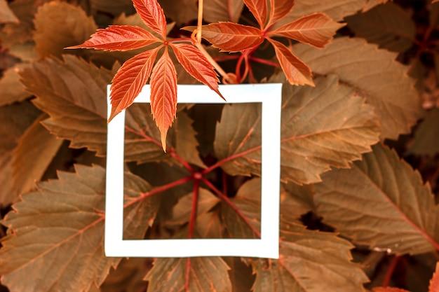 Foglie verdi come sfondo e un foglio di carta bianco per l'etichetta. Foto Premium