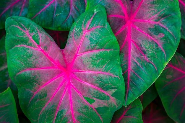 Foglie verdi con belle strisce rosa Foto Premium