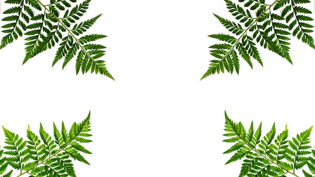 Foglie verdi della felce isolate su fondo bianco Foto Premium
