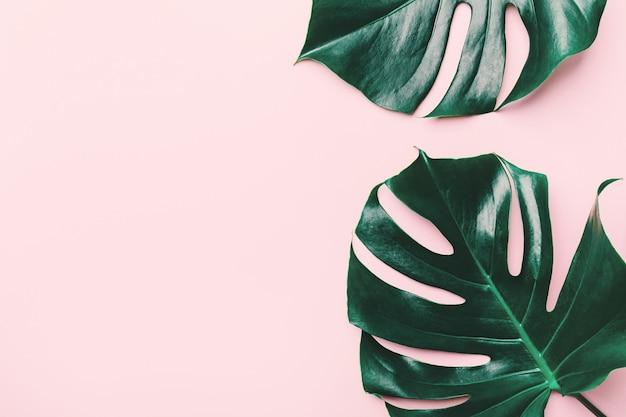 Foglie verdi di monstera sul rosa Foto Premium