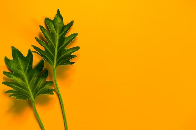 Foglie verdi su su sfondo giallo e copia spazio. Foto Premium