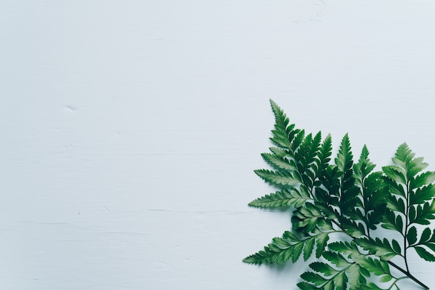Foglie verdi tropicali Foto Premium