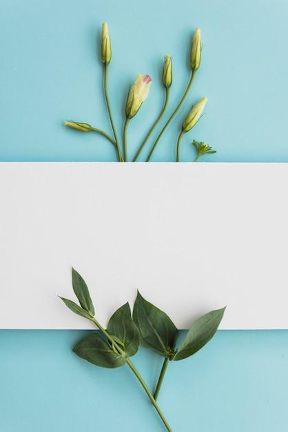 Foglio di carta vicino a foglie e boccioli Foto Gratuite