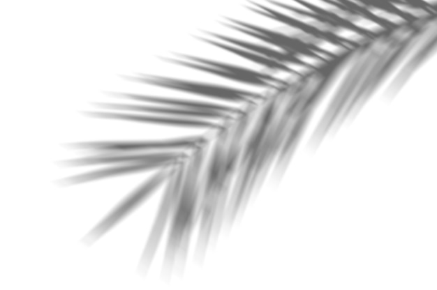 Fondo astratto di estate delle foglie di palma esotiche dell'ombra su una parete bianca. bianco e nero per sovrapporre una foto Foto Premium
