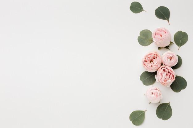 Fondo bianco dello spazio della copia con la disposizione delle rose Foto Gratuite
