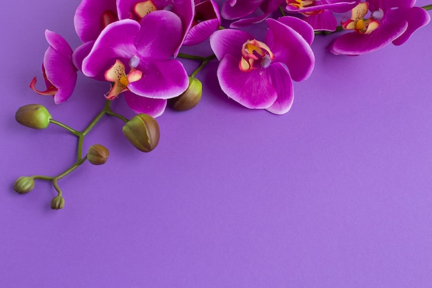 Fondo capovolto dello spazio della copia con le orchidee Foto Gratuite