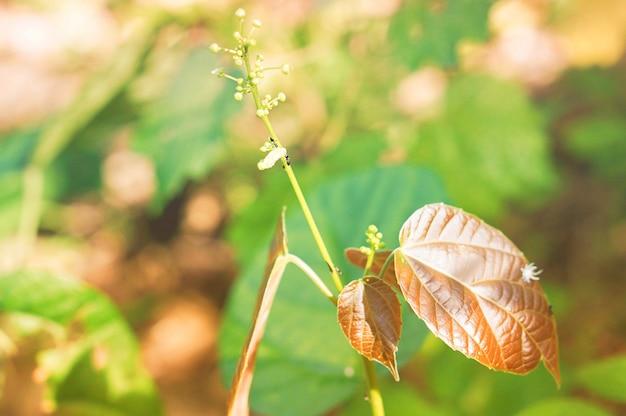 Fondo della carta da parati della natura del fiore e delle foglie dell'erba della primavera Foto Premium
