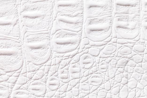 Fondo di struttura del cuoio bianco, primo piano. pelle di rettile, macro. Foto Premium