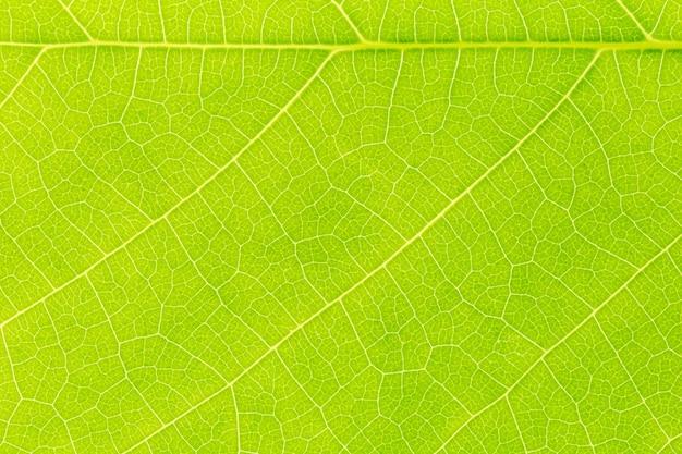 Fondo di struttura del modello della foglia verde Foto Premium