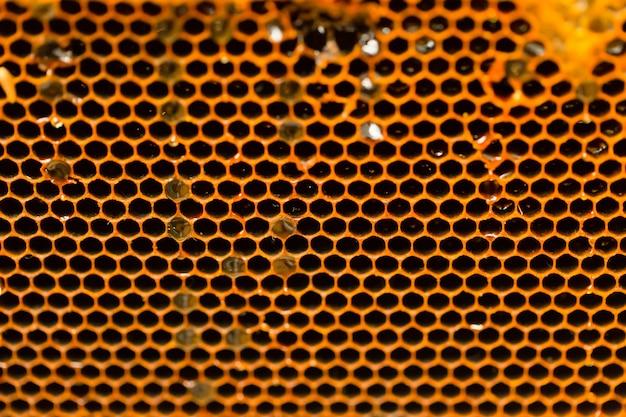Fondo di struttura del primo piano della casa dell'ape del favo Foto Premium