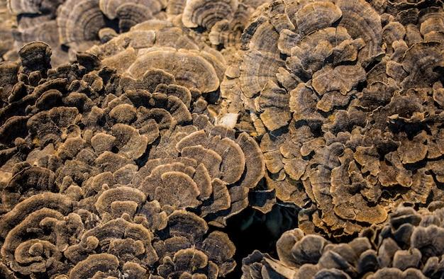 Fondo e struttura astratti della superficie del fungo. Foto Premium
