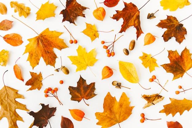 Fondo piano di disposizione di autunno su bianco Foto Gratuite