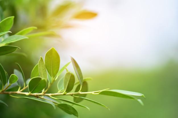 Fondo verde di spec della copia di luce solare del fondo della natura della foglia Foto Premium