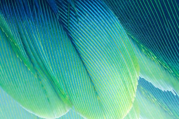 Fondo verde di struttura della piuma blu e del turchese Foto Premium