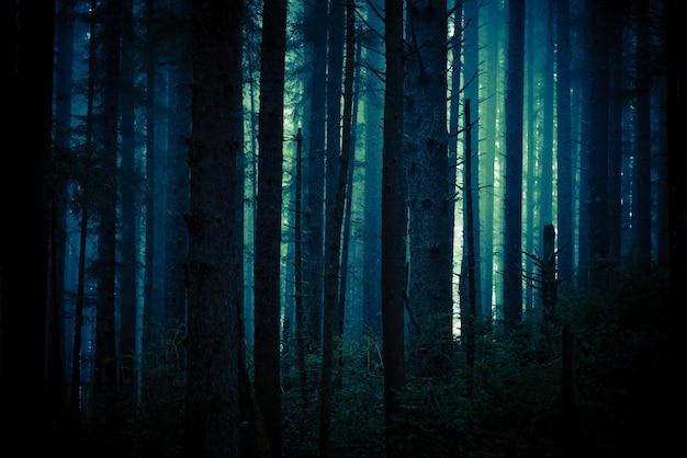 Foresta creepy oscura Foto Gratuite