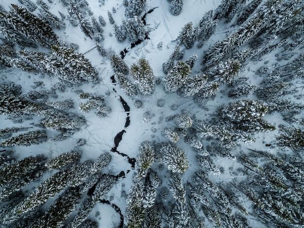 Foresta di abeti rossi coperti di neve in inverno Foto Gratuite