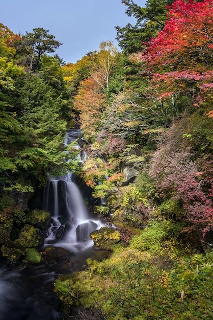 Foresta di autunno nikko giappone della cascata di ryuzu Foto Premium