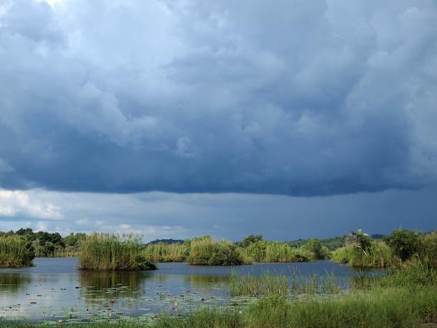 Foresta di mangrovie Foto Premium