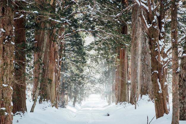 Foresta di neve al santuario di togakushi, in giappone Foto Gratuite