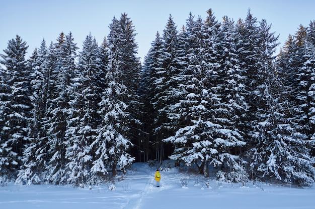 Foresta oscura, cammina nei boschi prima di natale Foto Premium