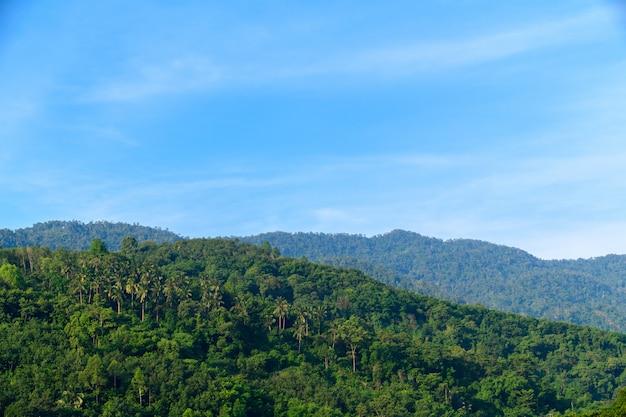Foresta pluviale tropicale a khao luang con cielo blu Foto Premium