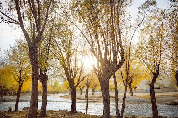 Foresta variopinta accesa alba nella stagione di autunno. fiume che attraversa gli alberi delle foglie di giallo. Foto Premium
