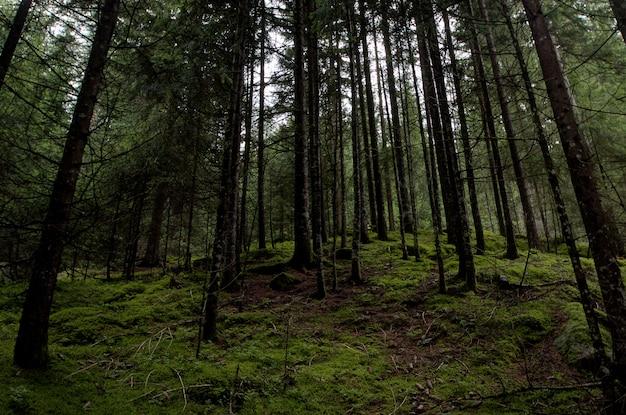 Foresta Foto Gratuite