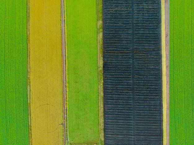 Foto aerea di vista superiore dal fuco di volo di una terra con i campi verdi seminati Foto Premium