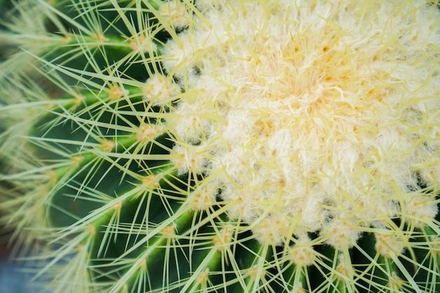Foto del primo piano del cactus Foto Premium
