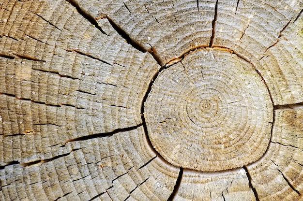 Foto del primo piano della priorità bassa di struttura di vecchio legno con gli anelli e le crepe Foto Premium