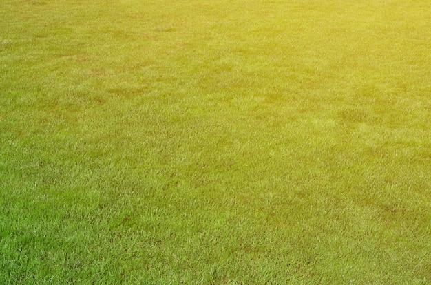 Foto del sito con erba verde uniforme. prato o vicolo di erba verde fresca Foto Premium