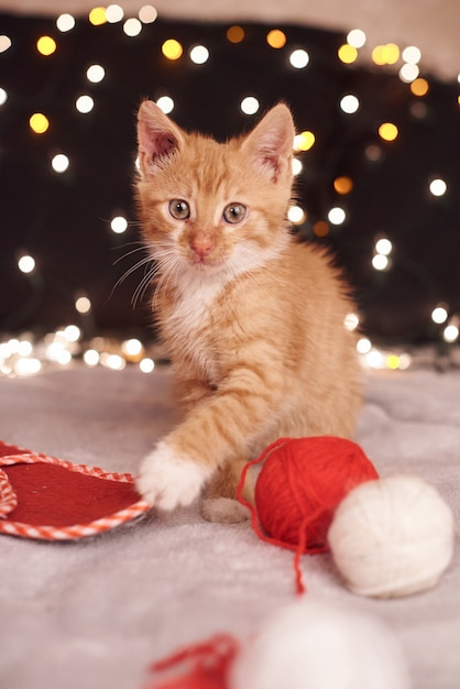Foto di natale con un simpatico gatto zenzero di luci colorate sullo sfondo Foto Premium