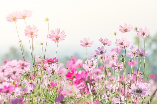 Fuoco molle e selettivo di universo, fiore confuso per fondo, piante variopinte Foto Premium