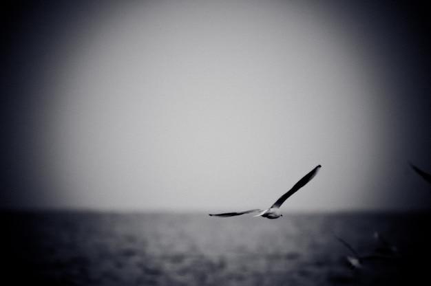 Gabbiano Che Salta Sul Mare Foto In Bianco E Nero Con Effetto