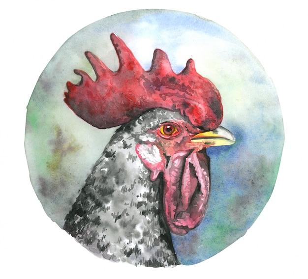 Gallo dell'acquerello Foto Premium