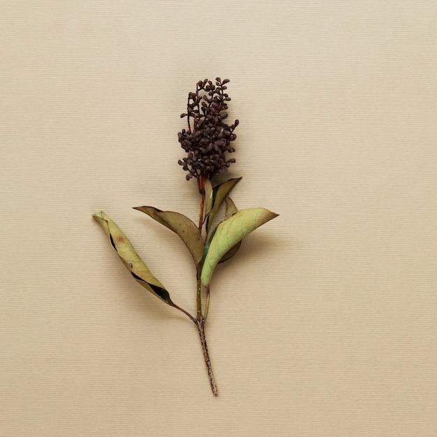 Gambo della pianta secca su fondo beige Foto Gratuite