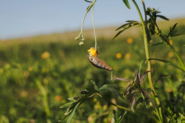 Gancio di pesca che appende sulla pianta del fiore giallo Foto Gratuite