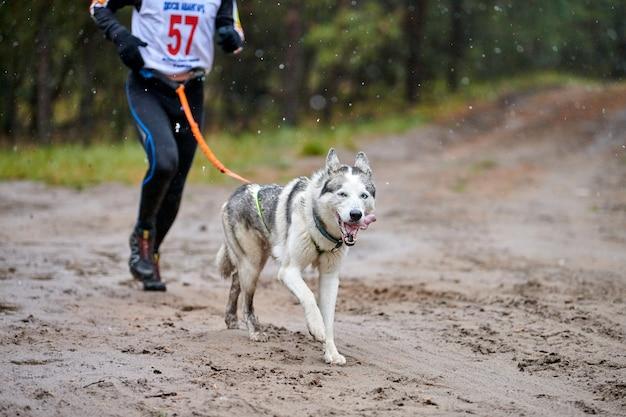 Gara di mushing del cane di canicross Foto Premium