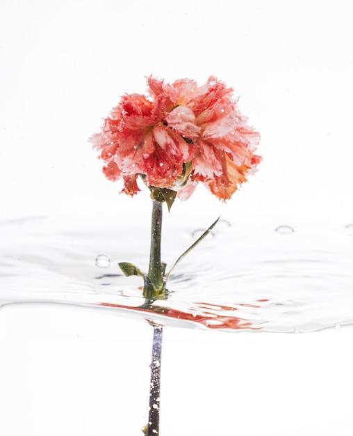Garofano rosa che cade nell'acqua Foto Gratuite