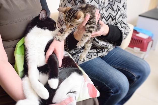 Gatti nelle mani dei loro proprietari nella superficie della coda per l'esame nella clinica veterinaria Foto Premium